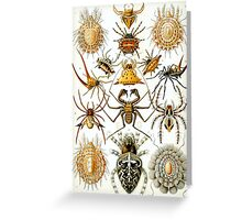 Ernst Haeckel's Arachnida Spiders Greeting Card