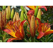 Lilies After Heavy Rain Photographic Print