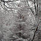 Snow Tree by Kidono-chan