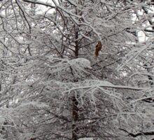 Snow Tree Sticker
