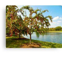 Mcbride Arboretum Crabapple Trees Canvas Print