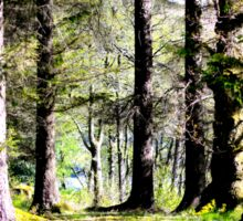 Trees in Scotland Sticker