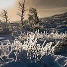 Mountain Ice by mfsutherland