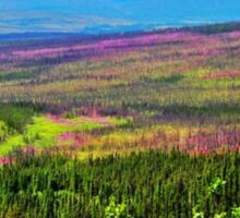 Acres of Fire Weed in Alaska Sticker