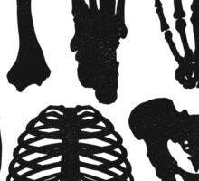 Osteology Sticker