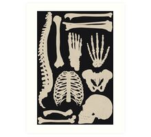 Osteology Art Print