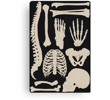 Osteology Canvas Print
