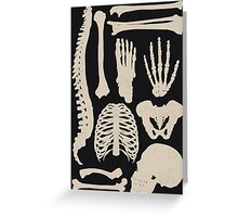 Osteology Greeting Card