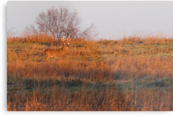 Buck on Hillside - White-tailed deer by Jim Cumming