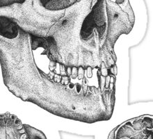 Skull multi view Sticker