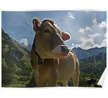 Mountain Cow Poster