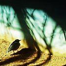 Lonely Little Bird by Shawna Rowe