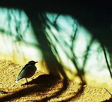 Lonely Little Bird by Shawna Rowe