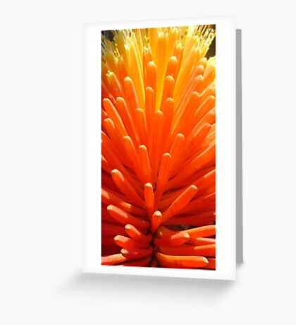 Hot Poker Up Close Greeting Card