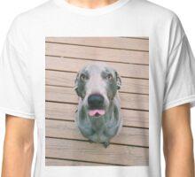 Teasing Weimaraner Classic T-Shirt