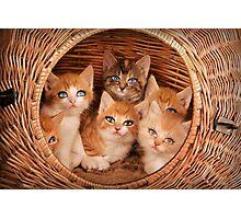 Sweet Kittens Photographic Print