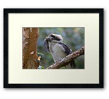 Kookaburra World Framed Print
