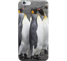 "King Penguins ~ ""The Line Dancers"" iPhone Case/Skin"