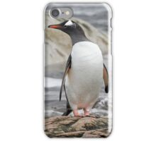 Gentoo Penguin iPhone Case/Skin