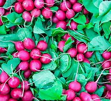 Purple Radishes Green Leaves by luckypixel