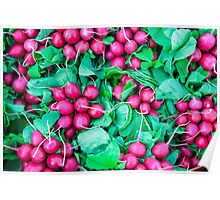 Purple Radishes Green Leaves Poster