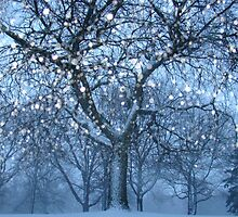 Winter Shimmers by Kelly Chiara