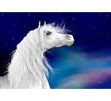 Star Gazer .. White Stallion Photographic Print