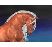 Apollo .. Golden Stallion Photographic Print