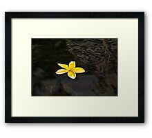 Golden Yellow - Sparkling Plumeria Blossom in Dark Waters Framed Print