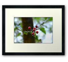 """ Raindrops On Holly "" Framed Print"