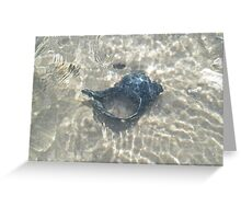The Black Seashell Greeting Card