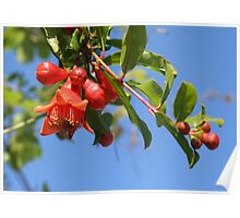 Pomegranate Flowers And Blue Skies Poster