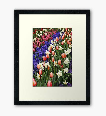 Colorful spring garden Framed Print