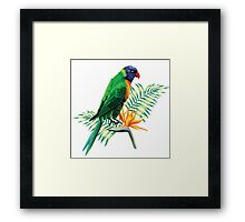 Colorful Parrot & Birds Of Paradise  Framed Print