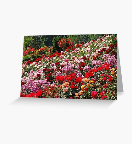 Colorful rose garden Greeting Card