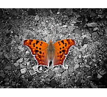 Question Mark Butterfly Photographic Print