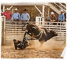 Rodeo Cowboy is Thrown from His Bull Poster