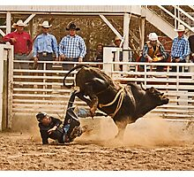 Rodeo Cowboy is Thrown from His Bull Photographic Print