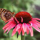 Red coneflower and fritillary by Alice Kahn