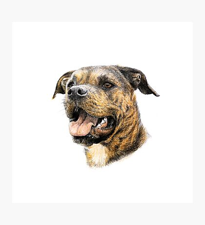 dog portrait Photographic Print