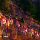 Spring Migration by Bunny Clarke