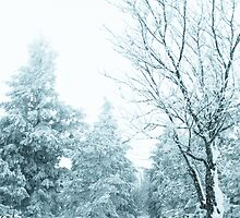 Snow and frost covered pine trees by homydesign