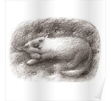 White Cat Sleeping on a Sofa Poster