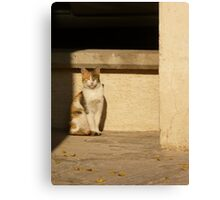 Stray Cat Canvas Print