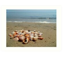 Shells on the Beach Art Print