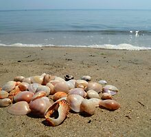Shells on the Beach by Vicki Spindler (VHS Photography)