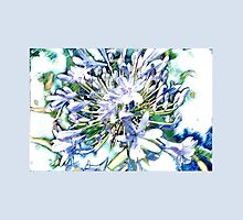 Agapanthus by LeithSemmens
