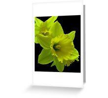 Daffodils Rejoicing Greeting Card