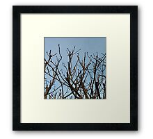Trees on blue Framed Print