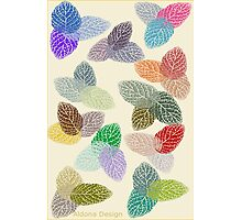 Coloured Leaf Pattern 2502 Views Photographic Print